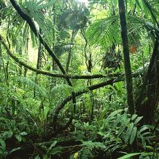 выживание в джунглях